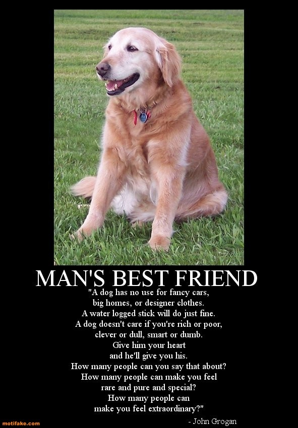 Man s best friend positive thoughts on life for Best dogs for companionship