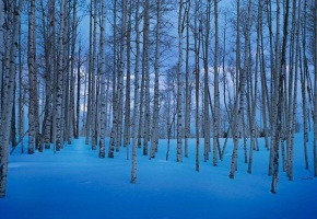 blue snow and aspens