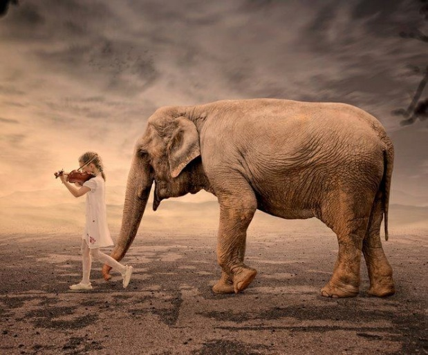 awesome elephant and little girl with violin